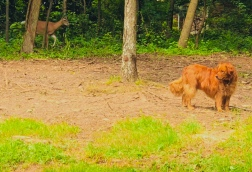 Deer Gracie Part 4