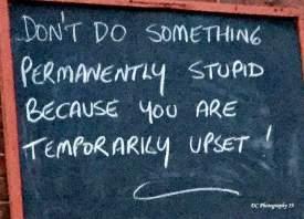 pub-wall-stupid_0227