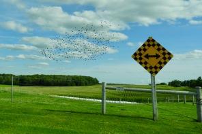 bird-n-directions