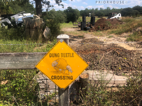 florida-dung-beetle-crossing-profrifoll